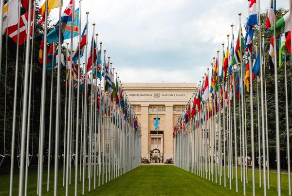 Organisation des Nations Unies